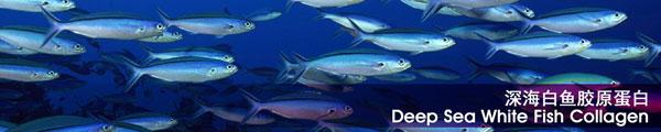 คอลลาเจน ปลาน้ำลึก