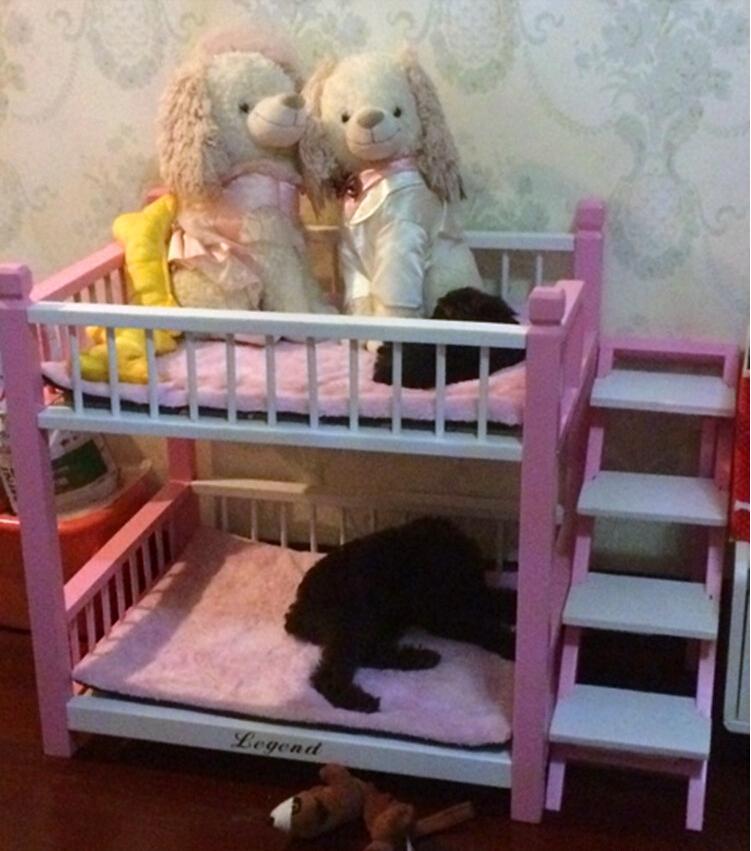 เตียงนอนไม้สำหรับหมาแมว มีหลายขนาด แบบ 2 ชั้น มีบันไดขึ้นลงด้านข้าง รุ่นยอดนิยม