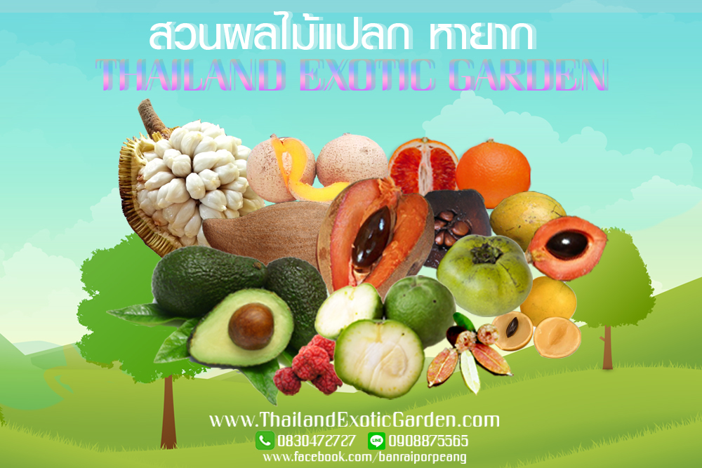Thailand Exotic Fruit Garden