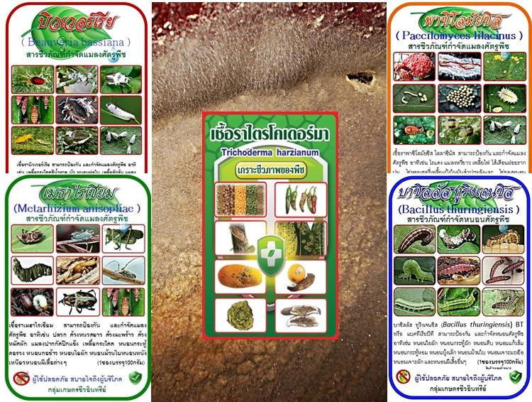 ชุดขยายเชื้อ5พลัง กำจัดแมลงศัตรูพืช โรคพืช
