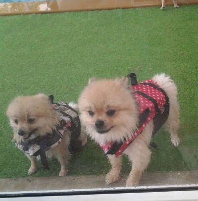 เสื้อชูชีพสุนัข Size L