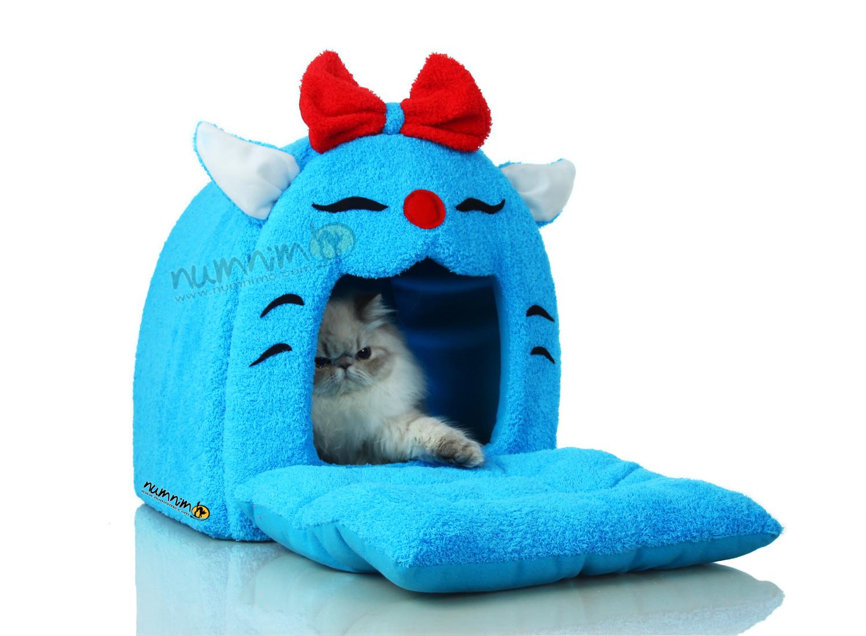 โดมแมวสีฟ้า
