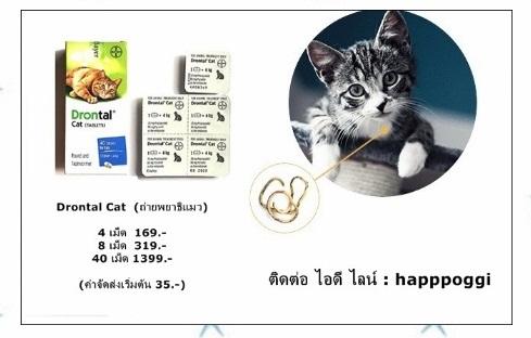Drontal Cat ยาถ่ายพยาธิแมว (4 เม็ด 169.-)